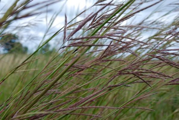 Prairie - - 3