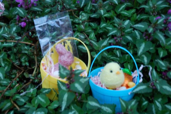 Easter hunt -  - 8
